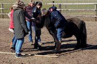 De Weiden coachen met paardenkracht